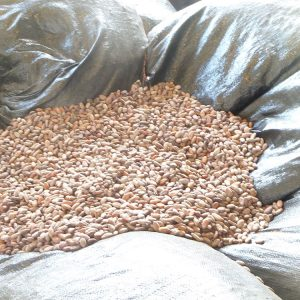 cacao-sourcin-4